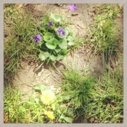 Spring Flowers 1 - Carla Franklin
