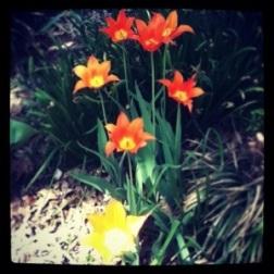 Spring Flowers 2 - Carla Franklin