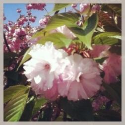 Spring Flowers 3 - Carla Franklin