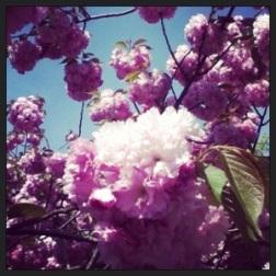 Spring Flowers 4 - Carla Franklin
